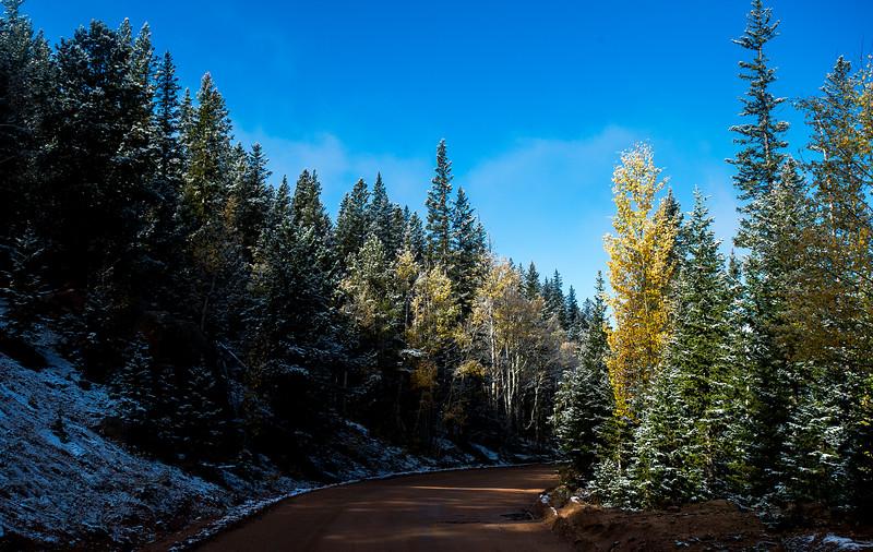 Sunlight illuminates an aspen in Pike National Forest on Tuesday, Sept. 26, 2017. <br /> <br /> (The Gazette, Nadav Soroker)
