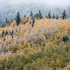 Frosted trees cover the mountain along Gold Camp Road on Tuesday, Sept. 26, 2017. <br /> <br /> (The Gazette, Nadav Soroker)