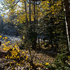 Aspens shake off loose leaves and water drops along Gold Camp Road on Tuesday, Sept. 26, 2017. <br /> <br /> (The Gazette, Nadav Soroker)
