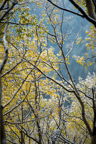 Frost coats aspens along Gold Camp Road on Tuesday, Sept. 26, 2017. <br /> <br /> (The Gazette, Nadav Soroker)
