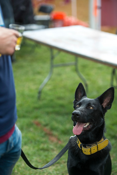 Bruce Wayne eyes his owner's Bristol Beehive Wheat Ale at Pawtoberfest 2017 in Bear Creek Regional Park in Colorado Springs, Colo. on Saturday, Sept. 16, 2017.<br /> <br /> (The Gazette, Nadav Soroker)