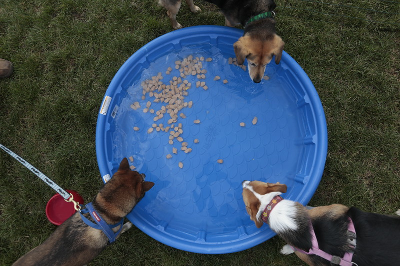Dog-owners gather at the Humane Society's Pawtoberfest 2017 in Bear Creek Regional Park in Colorado Springs, Colo. on Saturday, Sept. 16, 2017.<br /> <br /> (The Gazette, Nadav Soroker)