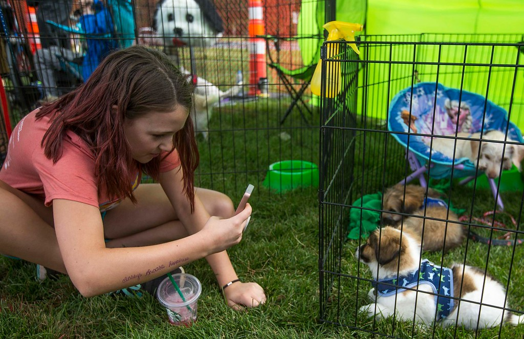 Olivia Harrelson, 11, photographs Jagger at the Misfits Dog Rescue booth at Pawtoberfest 2017 in Bear Creek Regional Park in Colorado Springs, Colo. on Saturday, Sept. 16, 2017. Harrleson volunteered at the event.<br /> <br /> (The Gazette, Nadav Soroker)