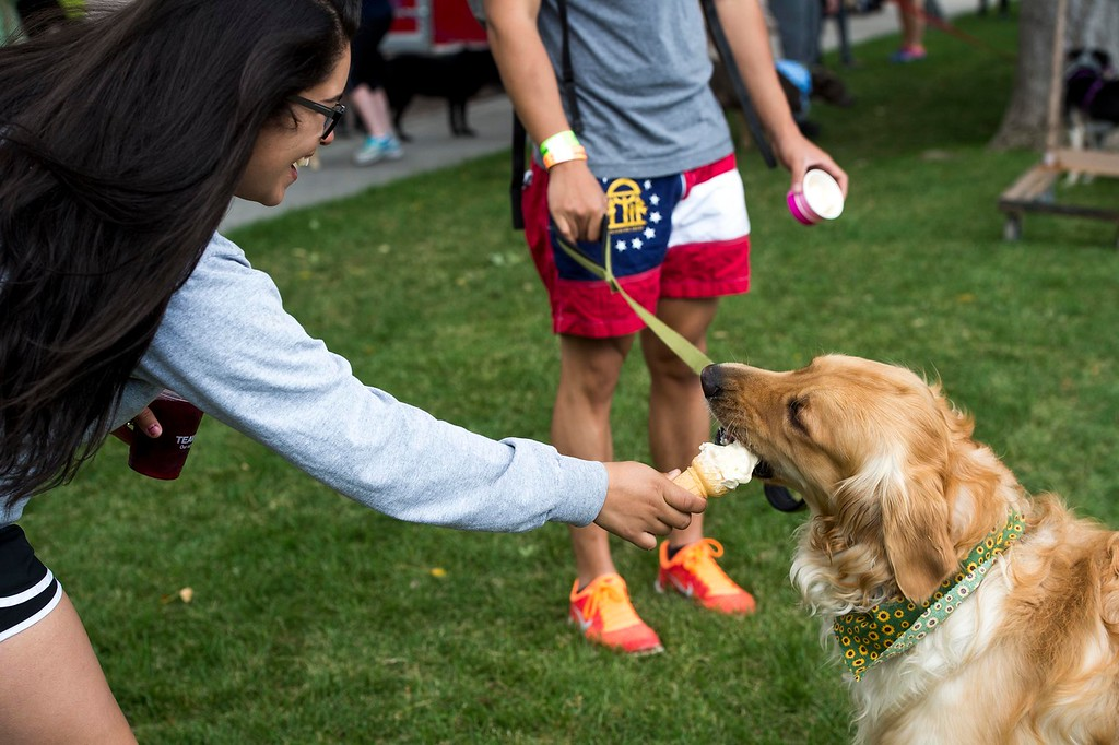 Winston chomps down on Justice Cumpian's ice cream at Pawtoberfest 2017 in Bear Creek Regional Park in Colorado Springs, Colo. on Saturday, Sept. 16, 2017. Cumpian offered him the ice cream after he turned down the dog ice cream that Cumpian and Jin Kim got for him.<br /> <br /> (The Gazette, Nadav Soroker)