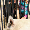 Cadence Cooper, 9, and Isabella Osterman, 9, pet a large sow from the East High School FFA chapter at the Laramie County Ag Expo which exposes fourth graders from all the Laramie County Schools to agriculture and where their food comes from Tuesday, September 17, 2019 at the Archer Complex.