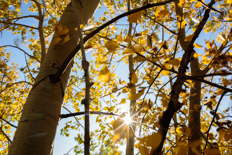 The aspens change color as fall weather arrives Wednesday, October 2, 2019 in the Vedauwoo recreation area. Nadav Soroker/Wyoming Tribune Eagle