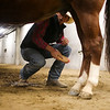 Danny Goold brushes Hank before the start of the Shawn Dubie Memorial Rodeo Saturday, October 12, 2019 at the  Laramie County Community College Arena. Goold competes in tie-down and team roping for LCCC. Nadav Soroker/Wyoming Tribune Eagle