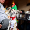 Dexter poses at a table in his championship lederhosen costume after the Dogtoberfest costume contest, Saturday, Oct. 19, 2019 at Freedom's Edge Brewing Company. Dexter was adopted from the Cheyenne Animal Shelter several years prior. Nadav Soroker/Wyoming Tribune Eagle