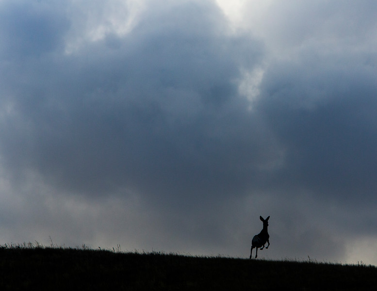 A deer bounds over the horizon Monday, Oct. 21, 2019 along County Road 210. Nadav Soroker/Wyoming Tribune Eagle