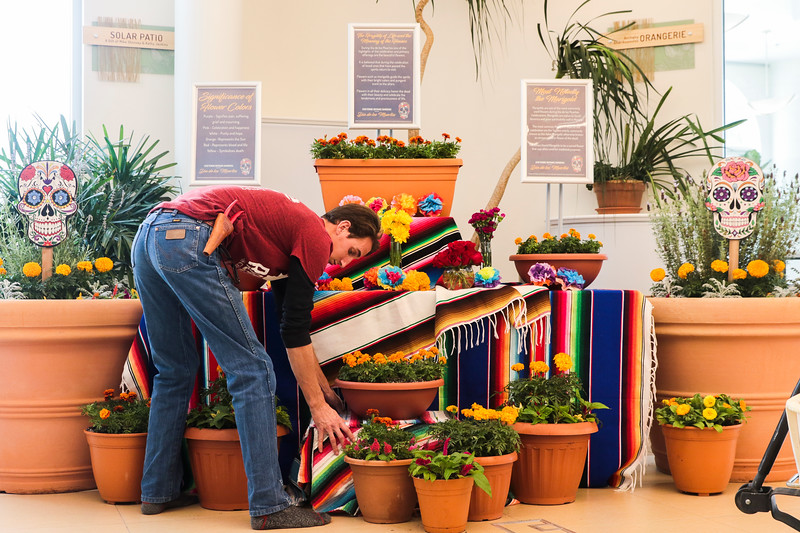 Isaiah Smith, an interior horticulturalist at the Cheyenne Botanic Gardens, adjust a display of marigolds on one of the displays at the gardens prepare for the upcoming Die de Los Muertos celebration, Tuesday, Oct. 29, 2019 in Cheyenne. The gardens grew 3,500 marigolds, celosia and calendula flowers for the event. Nadav Soroker/Wyoming Tribune Eagle