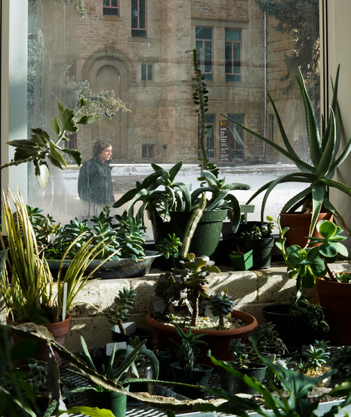 A man walks by outside in the cold while succulents thrive in in the Williams Conservatory, which maintains an average winter temperature of 75-degrees, Thursday, Dec. 12, 2019 in Laramie. The Conservatory will be hosting its Winter Plant Sale this Saturday, from 12-3, with the proceeds funding the conservatory's research and outreach programs. Nadav Soroker/Laramie Boomerang