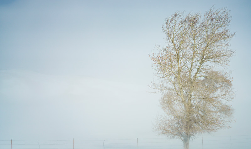 Snow blows a tree, Thursday, Dec. 12, 2019 in Albany County. Blowing snow and the snow showers will continue through the weekend, according to the National Weather Service. Nadav Soroker/Laramie Boomerang