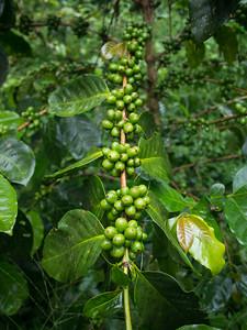 Nicaragua.17-293