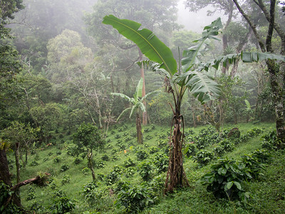 Nicaragua.17-262
