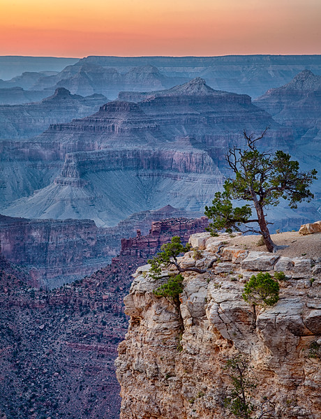 Lone Tree On the Canyon