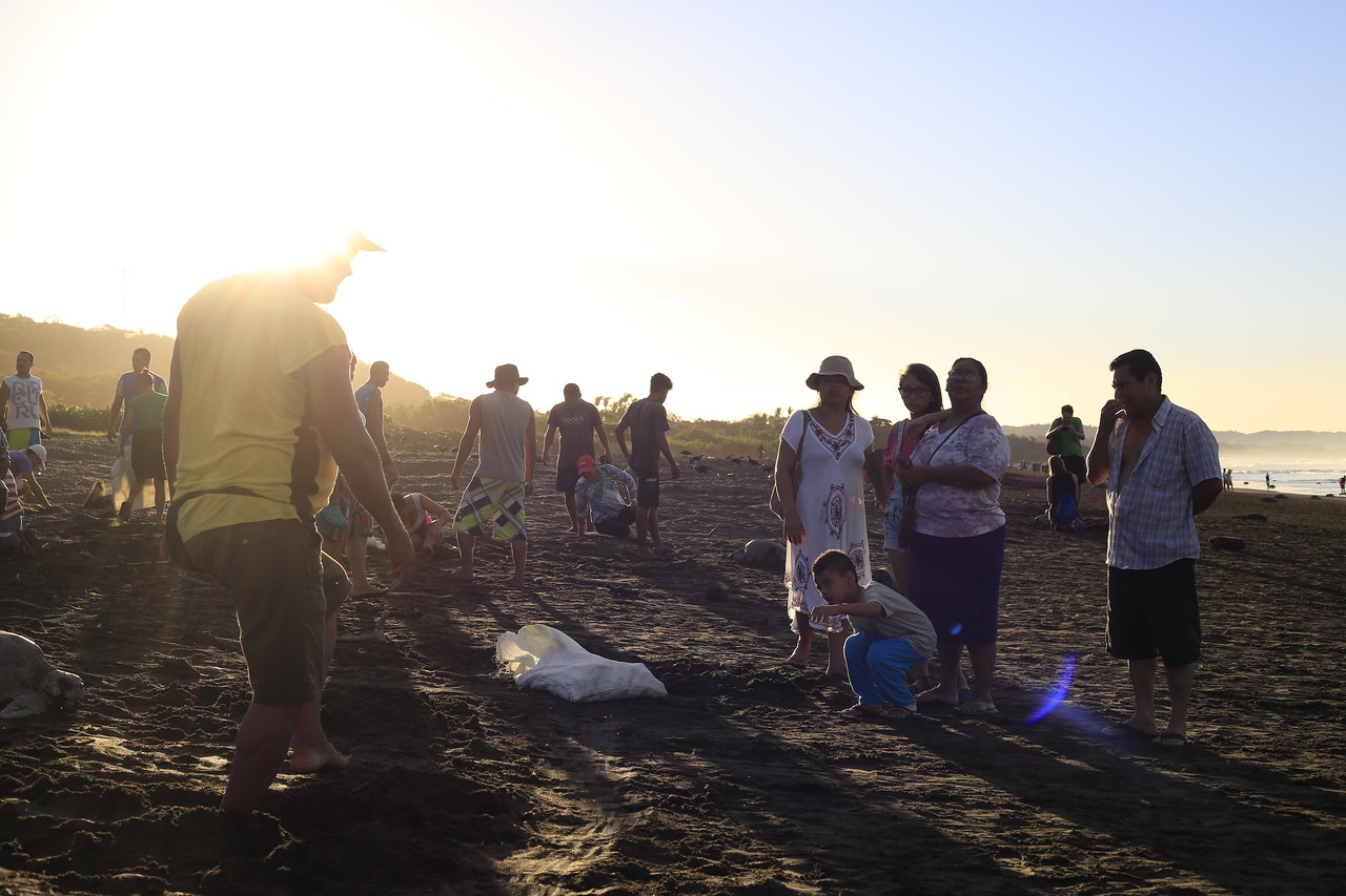 An Olive Ridley Sea Turtle Arribada, or arrival, starts early in the morning on the beach on Ostional, Costa Rica, on Friday, December 30, 2016.