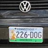 226-dog