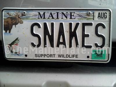 Specialty: Wildlife