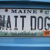 WAIT DOG
