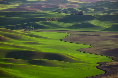 Lone Tree Steptoe Butte