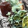 Lichen Color