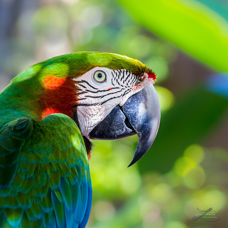 Colorful Parrot in Bright Sunlight 2