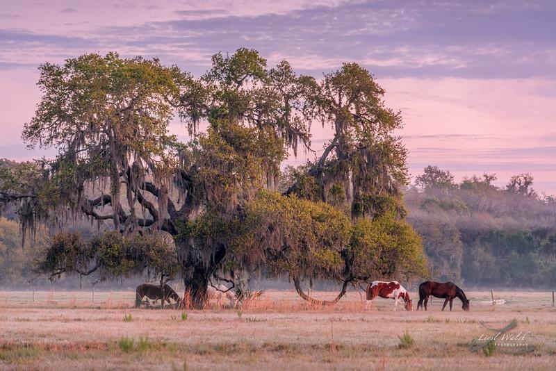 Foggy Morning in Myakka City, Florida
