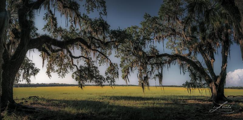 Myakka River State Park Prairie, Florida