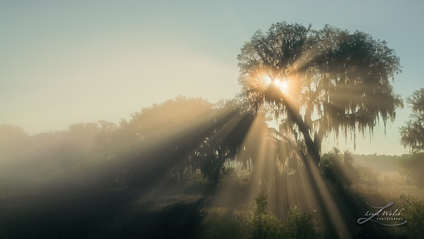Foggy Sun Rays in Myakka City, Florida