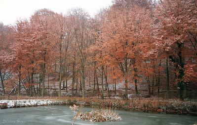 Parc du château sous la neige