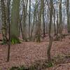 La Forêt de Soignes près du Rouge-Cloître