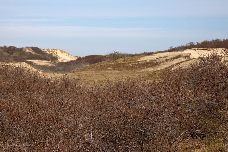 Les dunes du Zwin