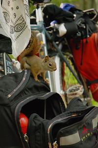 Écureuil au camping de Cavendish, Île-du-Prince-Édouard