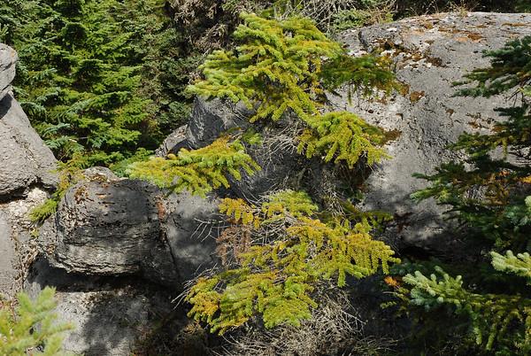 Tortue - Parc national de l'Archipel de Mingan