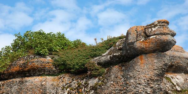 Serpent - Parc national de l'Archipel de Mingan