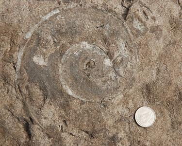 Fossile - Parc national de l'Archipel de Mingan