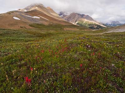 Parker Ridge Trail - Jasper National Park