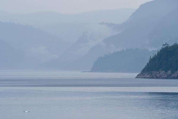 Béluga - Baie Ste-Marguerite, Fjord du Saguenay