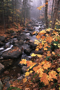 """Ruisseau à l'automne - Sentier """"La Roche"""", Parc national du mont Tremblant"""