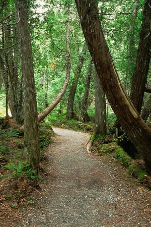 Sentier du mont Albert - Parc de la Gaspésie, Québec