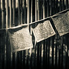 Message in the Bamboo