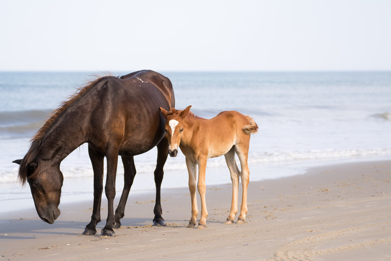 Momma and Baby Beach Stroll