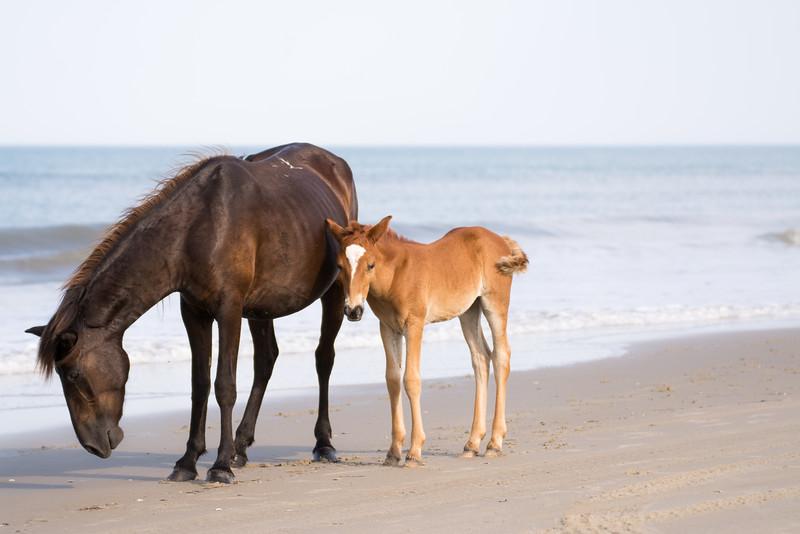 Momma and Baby Beach Stroll