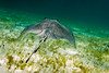 Sting Ray City - Grand Cayman Islands - Spring 2016