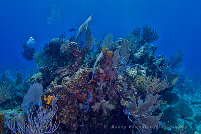 Great Wall Dive Site - Cayman Islands - Spring 2016