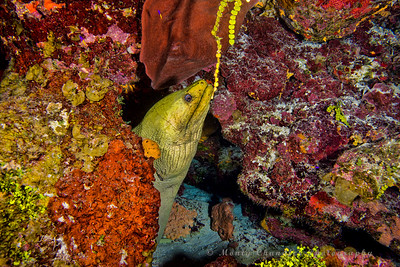 Round Rock Trinity Caves - Cayman Islands - Spring 2016
