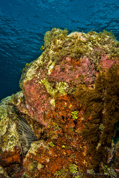 Devil's Grotto Dive Site - Cayman Islands - Spring 2016