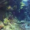 Columbia Deep - Lobster