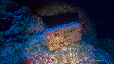A tribute to a fallen diver.  Somehow lost in this swimthrough in 2008. Palancar Bricks.