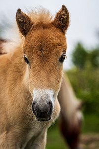 Foal and mom